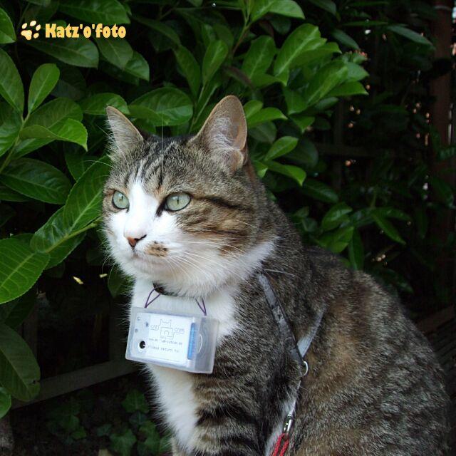 Charlie mit der CatCam v1