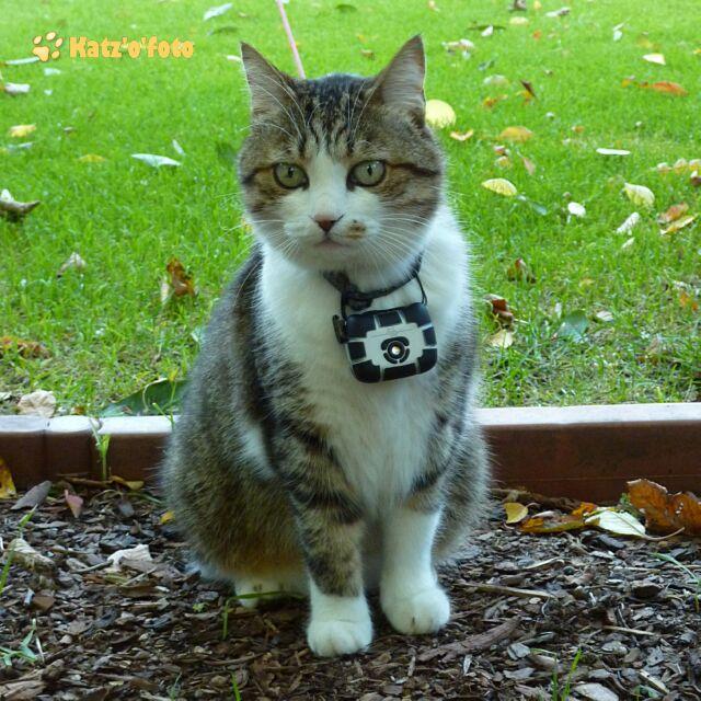 Charlie mit der CatCam v3